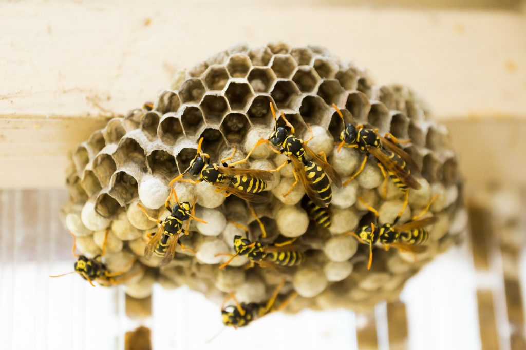 the-hive-335984_1920